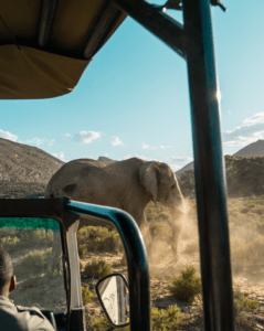 Best safari experience near cape town